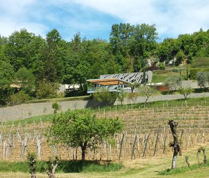 Istrian wine roads